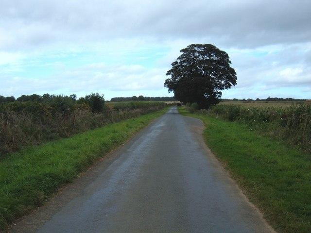 Wykeham Lane