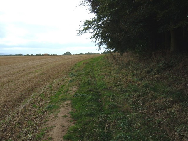 Bridleway beside Cockmoor Plantation