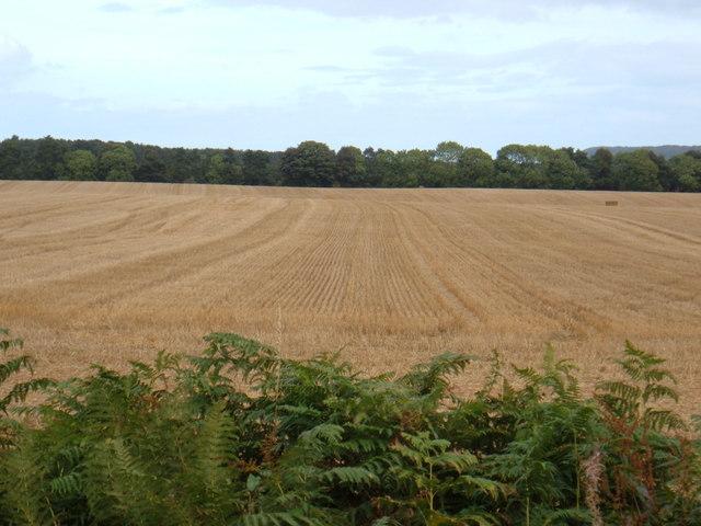 Farmland, North Moor