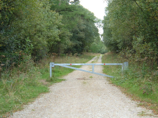 Gated Forest Track, Wykeham Forest