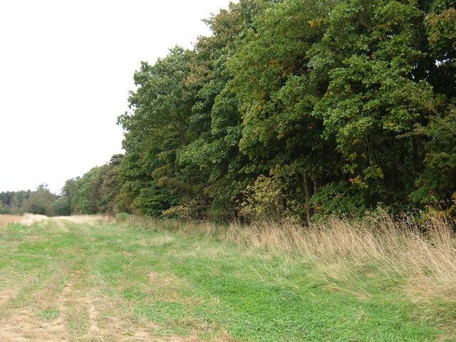 Woodland adjacent to Moor Closes