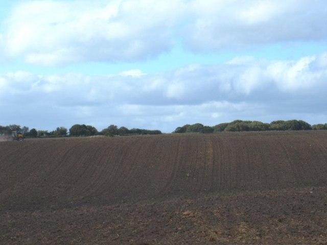 Farmland, Irton Moor