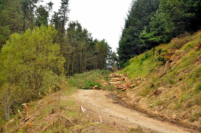 Barrier on a forest track, Twyn y Crug - Glyncorrwg