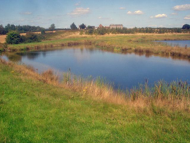 New pond - 2