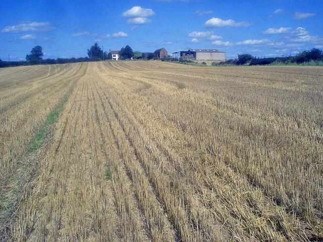 Stubble field near Bramborough Farm