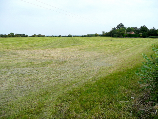 Grassland near Hinton Cross 3