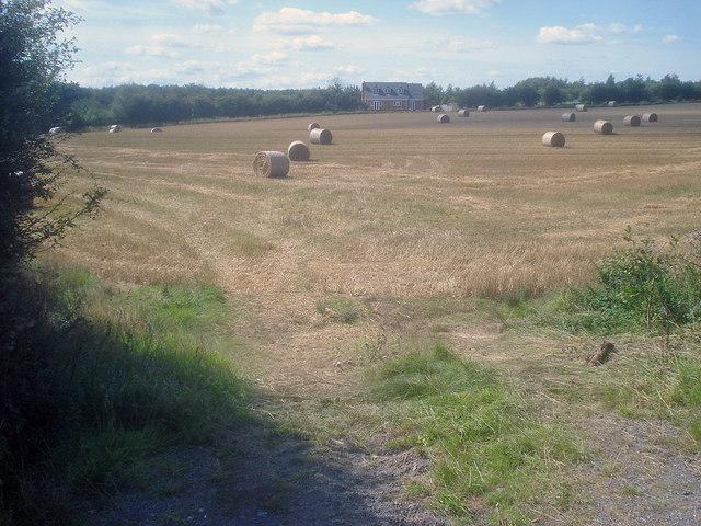 Straw bales near Bramborough Farm