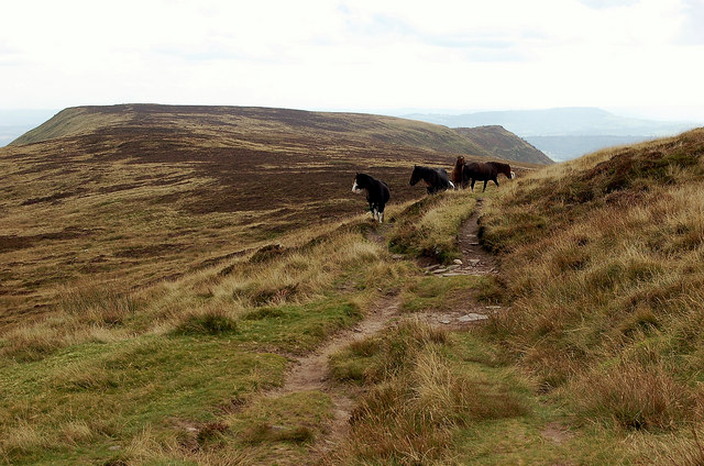 Hill ponies on the ridge to Black Hill