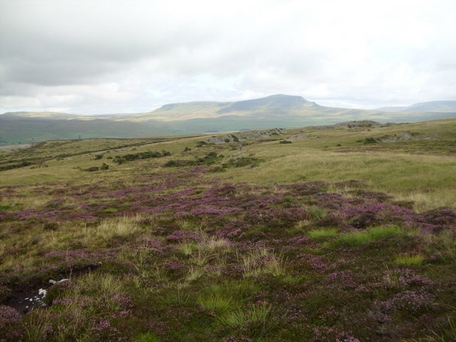 Heather on Moughton
