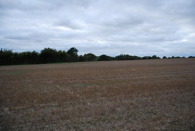 Large field north of Powder Mill Lane