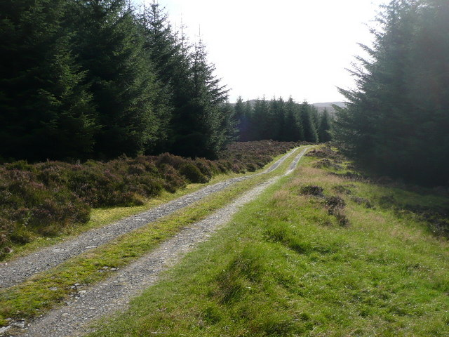 Forest track leading to Loch Broom
