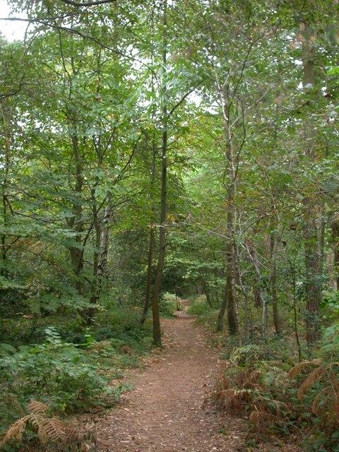 Branksome Park, Martello Woods