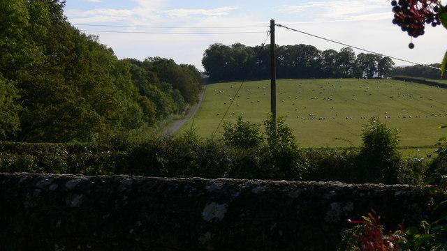 Field with sheep near Ebernoe