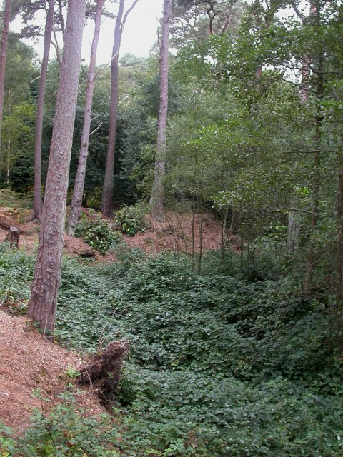 Branksome Park, stream bed