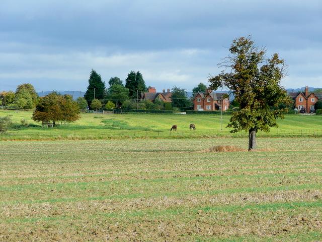 View to Dumbleton