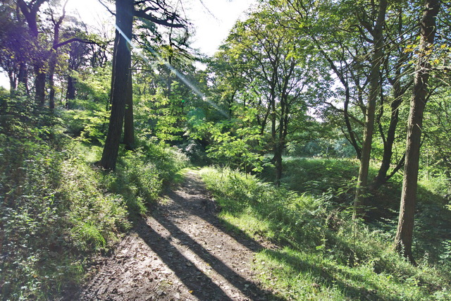 Bridleway in Buxton Country Park
