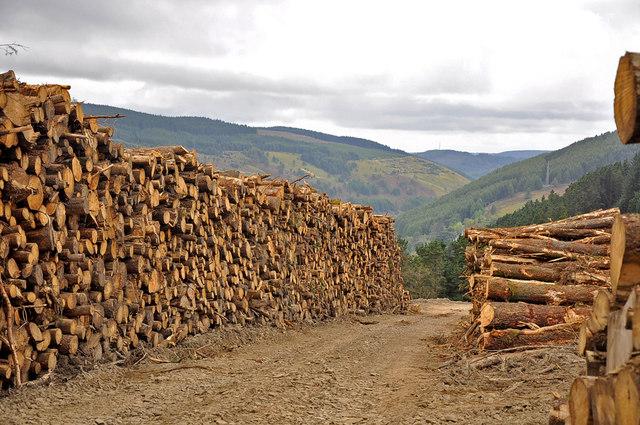 Timber harvest, Twyn y Crug - Glyncorrwg