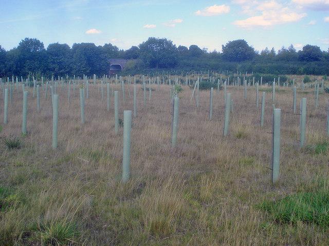 New Planting at Hicks Lodge