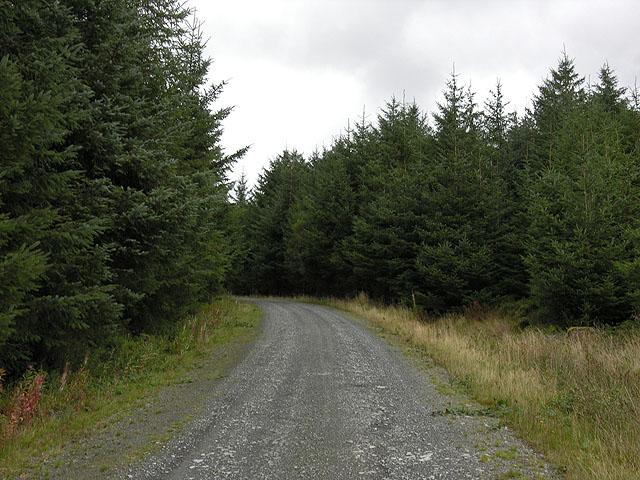 Corner on forestry track climbing Llechwedd y Glyn