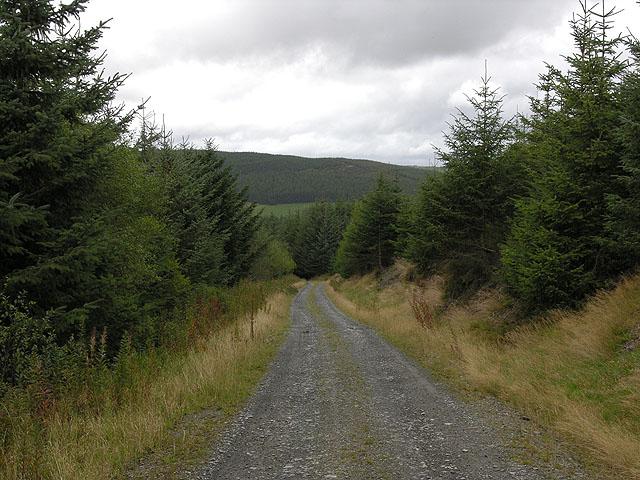 Forestry track climbing around Llechwedd y Glyn