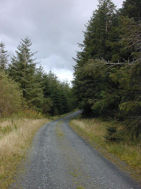 Forestry track on Mynydd y Groes