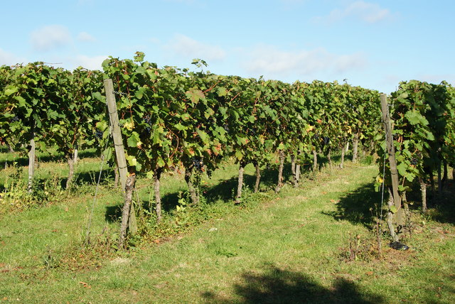Denbies Vineyard, Dorking, Surrey
