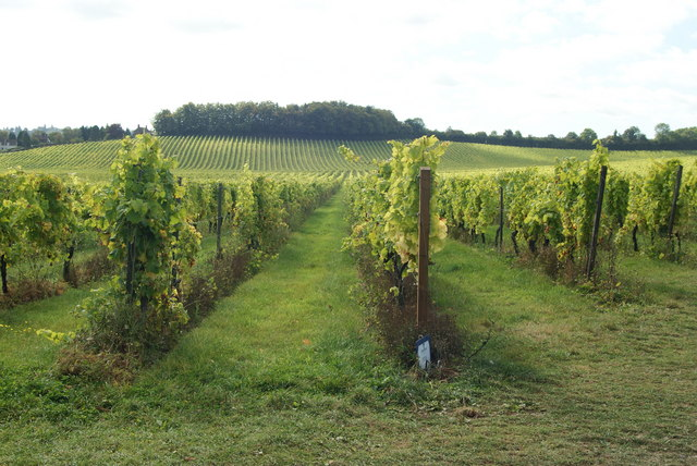 Denbies Vineyard, Dorking, Surrey