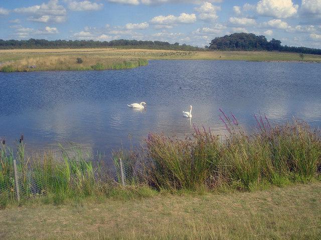 Large pond at Hicks Lodge - 2