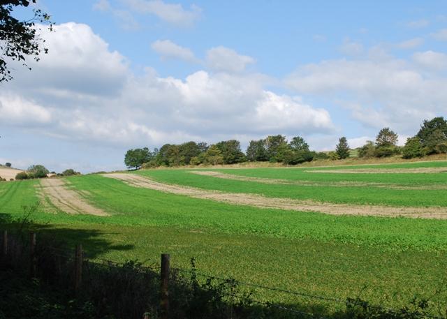 Farmland on Stoke Down
