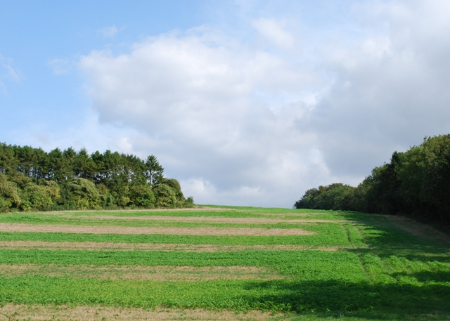 Farmland and woods, Stoke Down