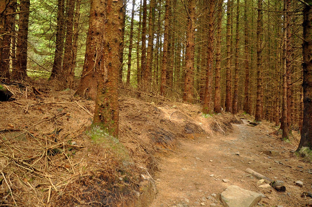 Section of the Granada bike trail - Afan Forest Park