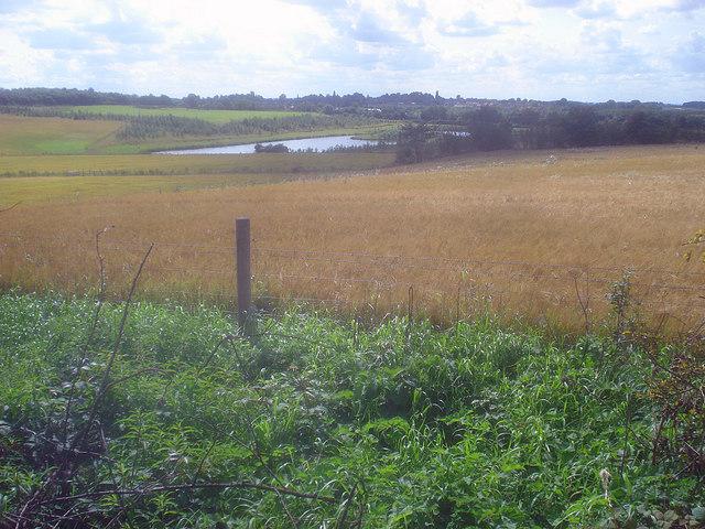 Barley crop at Hicks Lodge