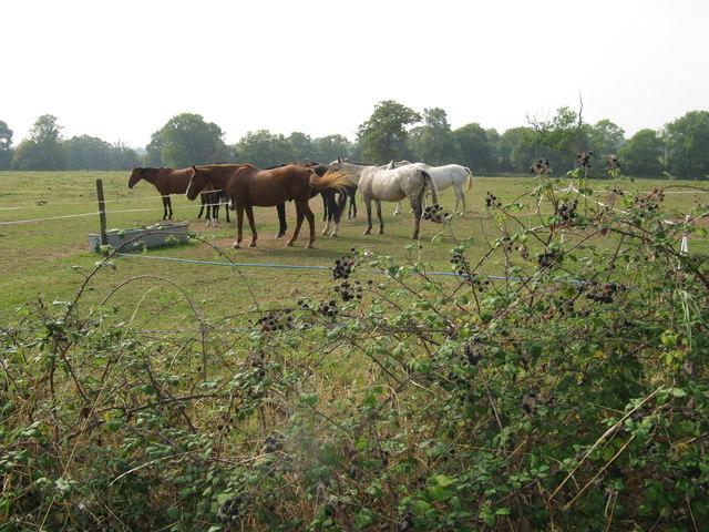 Horses at Lower Barn Farm