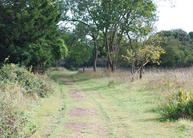 Grassy track, Kingley Vale National Nature Reserve