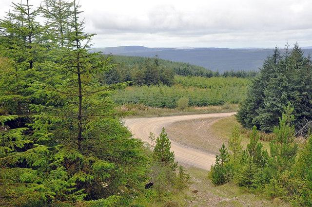 Forestry road on Bryn Llydan - Afan Forest Park