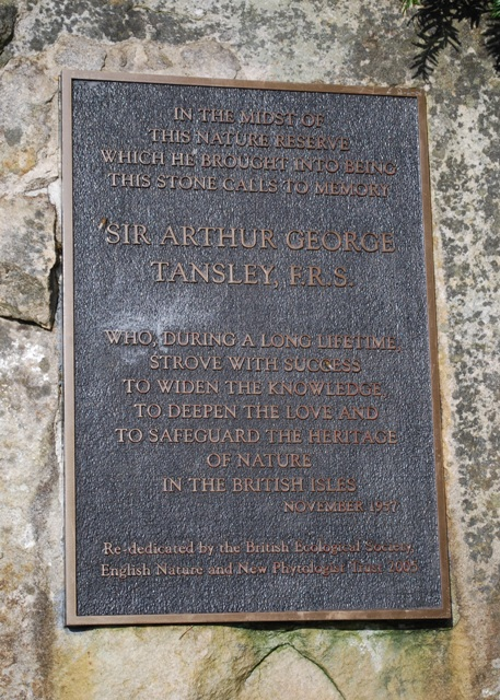 The Tansley Stone, Kingley Vale.