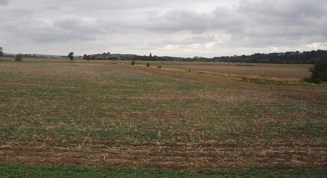 Fallow field off Camber Rd