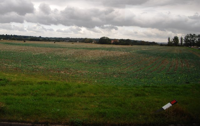 Arable field off Camber Rd