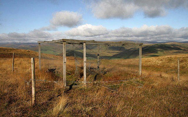 A crow trap at Ladhope Middle