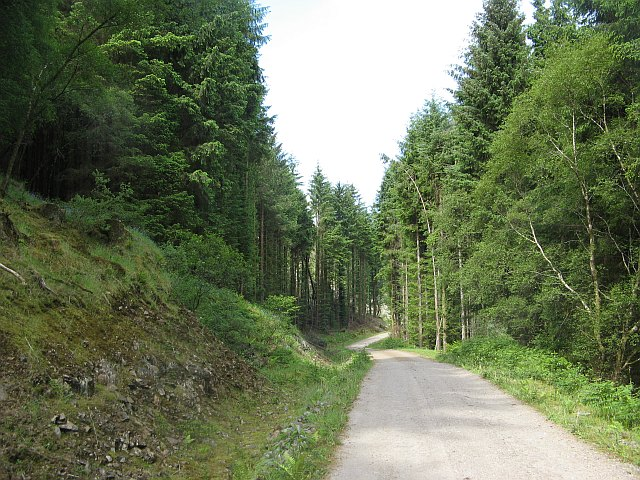 Forest road, Loch Teacuis