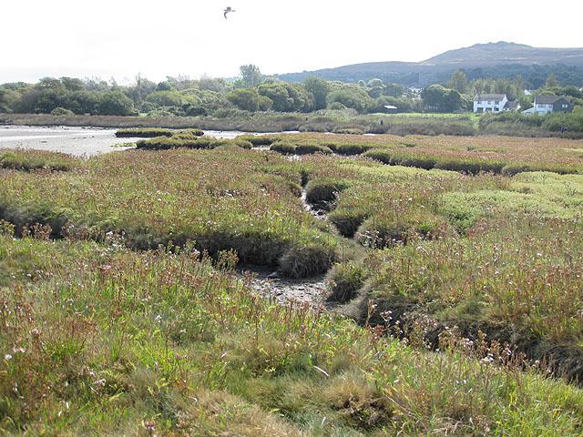 Salt-marsh at Trefdraeth/Newport