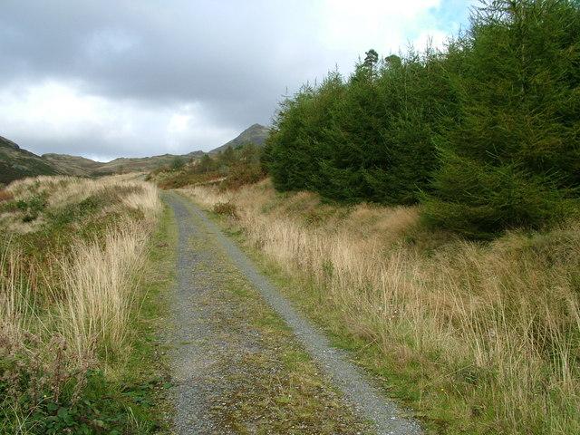 Forest road , Broughton Moor