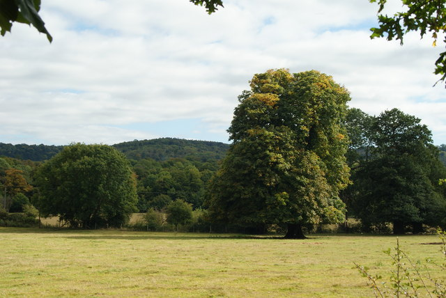 View Towards Box Hill, Surrey