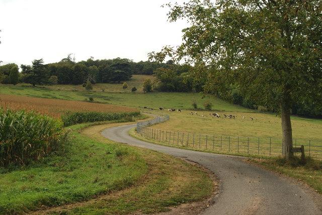 Road to Norbury Park House, Surrey