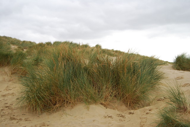 Marram Grass, Camber Sands