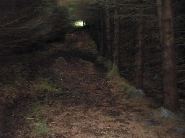 Light at the end of forest tunnel