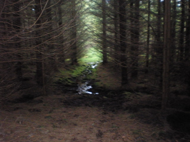 Approaching clearing deep, deep in the forest
