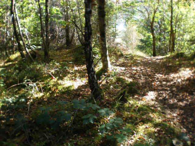 Forest walk by Allt na Crìche