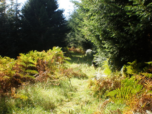 Forest walk near Allt na Crìche