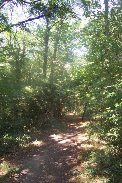 Public footpath in West Hoath Wood